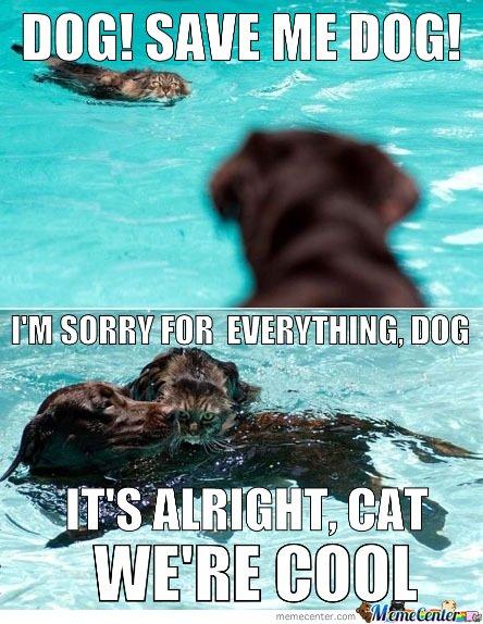 Dog save me dog I'm sorry for Pet Meme