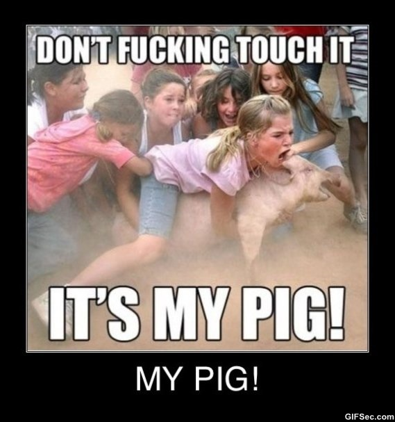 Don't fucking touch it its my pig Pigs Meme