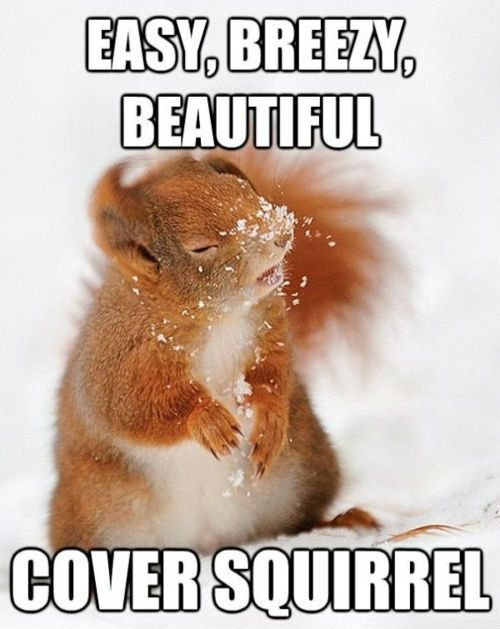 Easy breezy beautiful cover squirrel Squirrel Meme