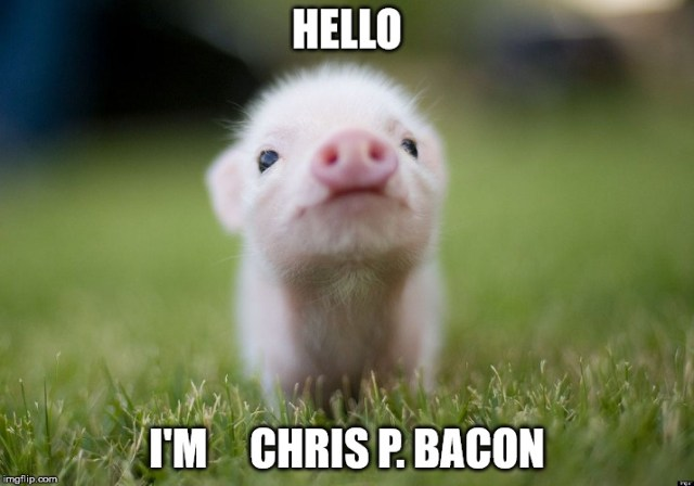 Hello I'm chris p bacon `Pigs Meme