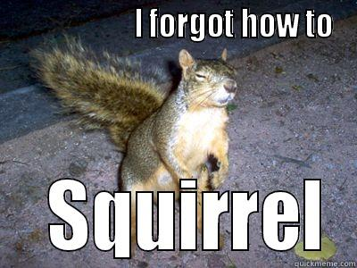 I forgot how to squirrel Meme