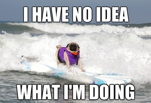 I have no idea what I'm doing Surfing Meme