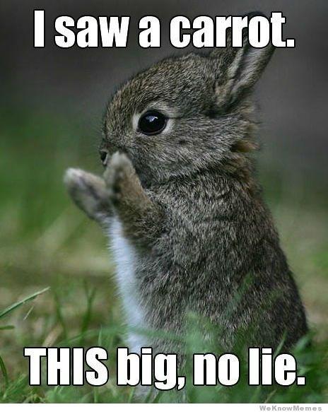 I saw a carrot this big no lie Rabbit Meme