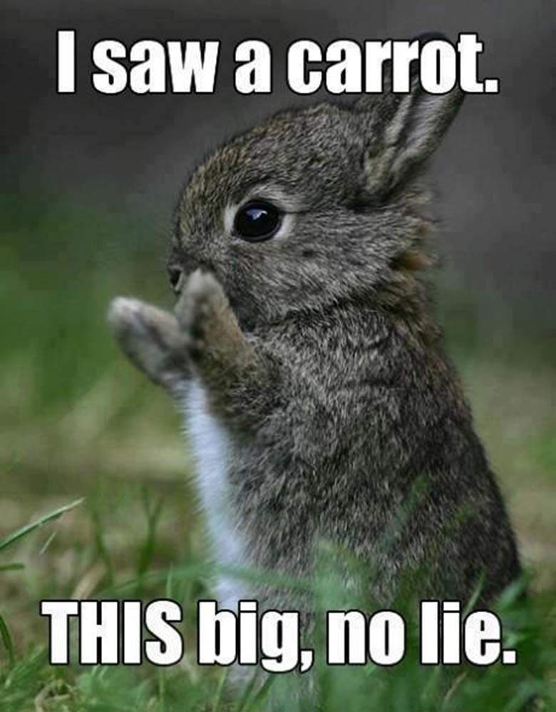 I saw a carrot this big no lie Squirrel Memes