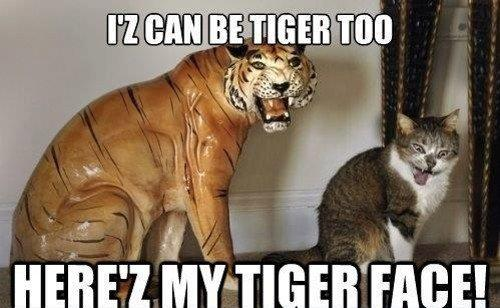 Iz can be tiger too here'z my tiger face Tiger Meme