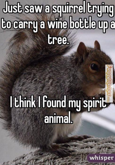Just saw a squirrel trying to carry Squirrel Memes