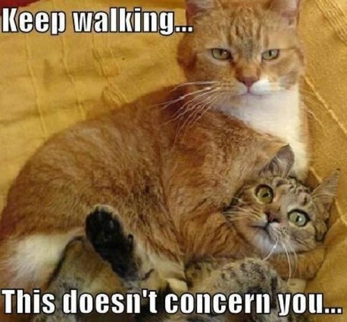 Keep walking this doesn't concern you Pet Meme