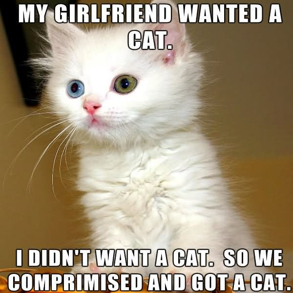 My girlfriend wanted a cat i didn't War Memes