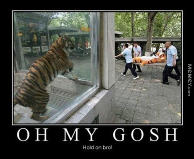 Oh my gosh hold on bro Tiger Meme