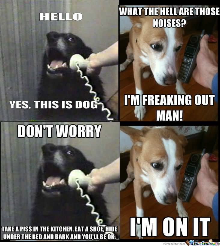 Pet Meme Hello yes this is dog what the hell are those noises