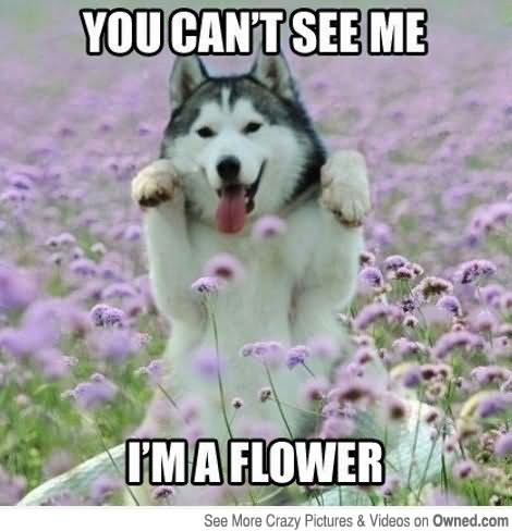 Pet Meme You can't see me I'm a flower