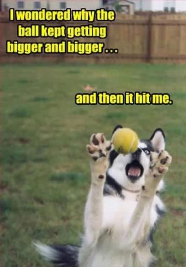 Pet Memes I woundered why the ball getting