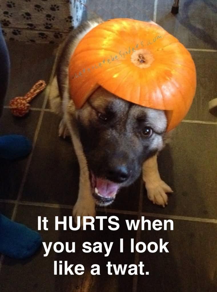 Pumpkin Meme It hurts when you say i look like a twat