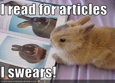 Rabbit Meme I read for articles i swears