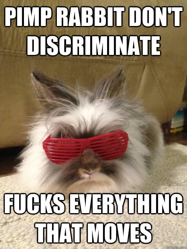 Rabbit Meme Pimp rabbit don't discriminate