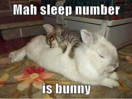 Rabbit Memes mah sleep number is bunny