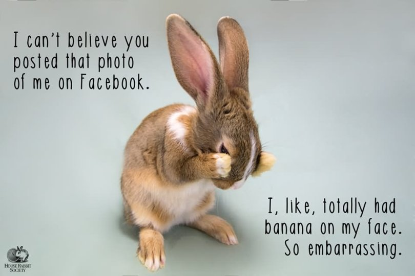 Rabbit Memes I can't believe you posted that photo of me on facebook