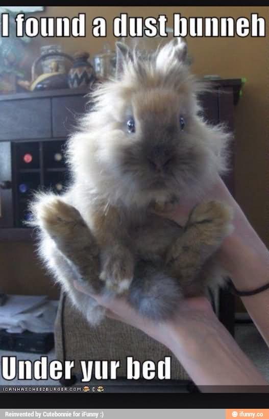 Fall Vibes Wallpaper Rabbit Memes I Found A Dust Bunneh Under Yur Bed Picsmine