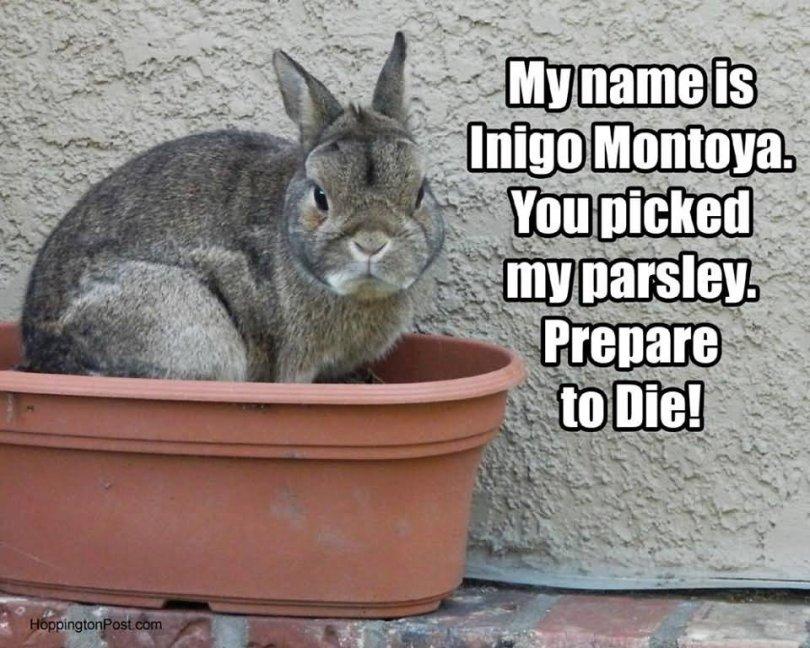 Rabbit Memes My name is lnigo montaya you picked