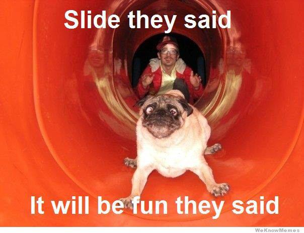Slide they said it will fun they said Pet Meme