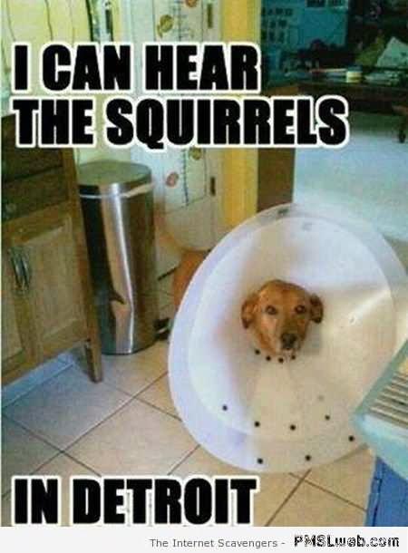 Squirrel Meme I can hear the squirrels in detroit