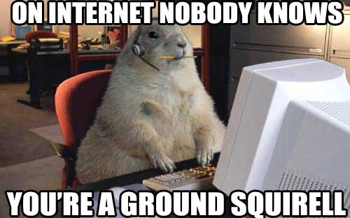 41 Most Funniest Squirrel Memes Images, Pictures & Gifs