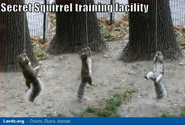Squirrel Meme Secret squirrel training facility