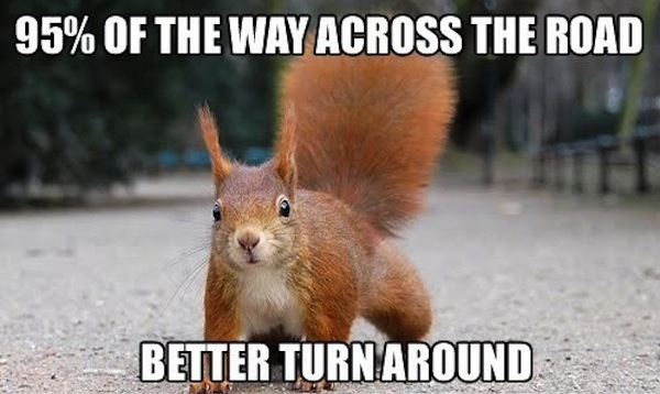 Squirrel Meme95 of the way across the road better turn around