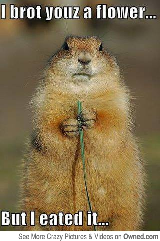 Squirrel Memes I brot youz a flower but i eated it
