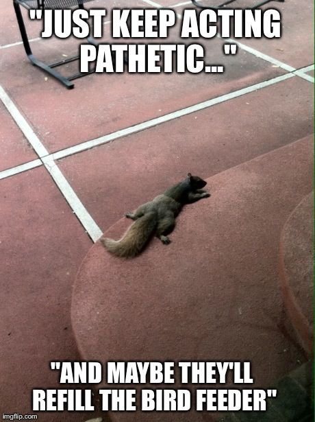 Squirrel Memes Just keep acting pathetic and maybe they'll