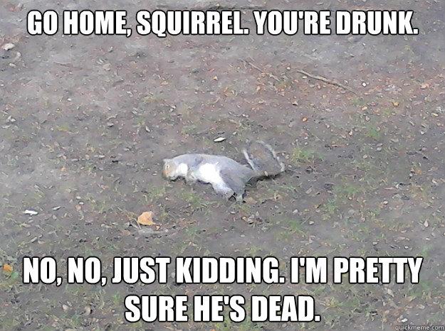 Squirrel Memes go home Squirrel you're drunk no no just kidding I'm pretty