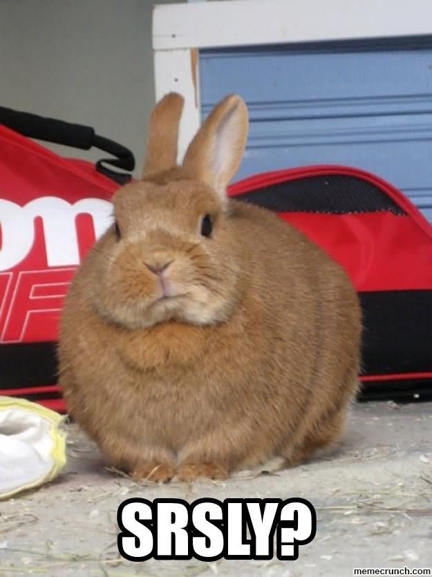 Srsly Rabbit Meme