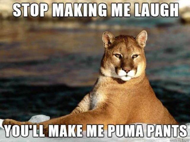 Stop making me laugh you'll make me puma pants Stop Memes