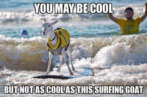 Surfing Meme You may be cool but not as cool as this surfing