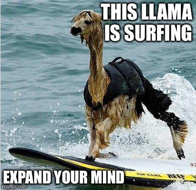 This llama is surfing expand your mind Surfing Meme