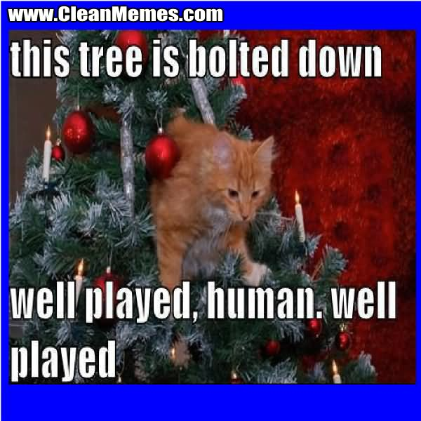 This tree is bolted down well played human well played Tree Memes