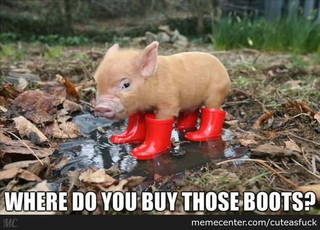 Where do you buy those boots Pigs Meme