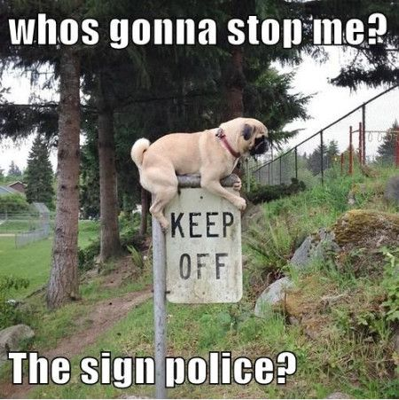 Whos gonna stop me the sign police Stop Memes