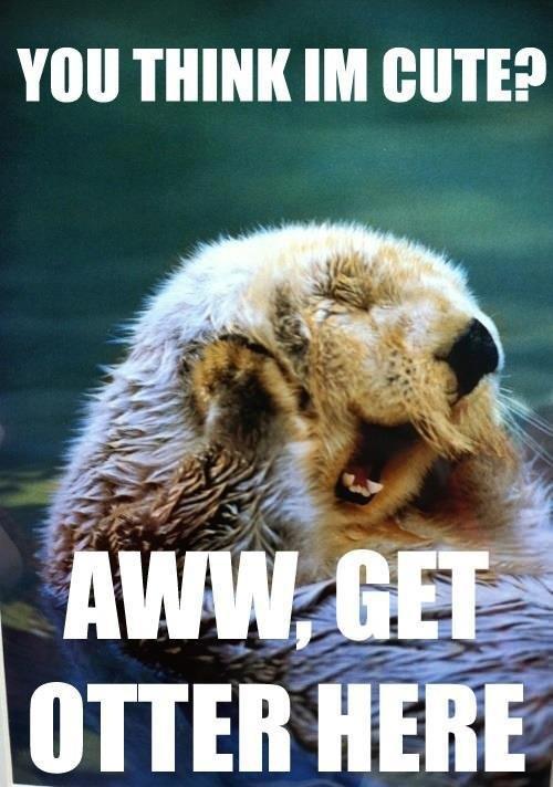 You think I'm cute aww get otter here Pet Meme