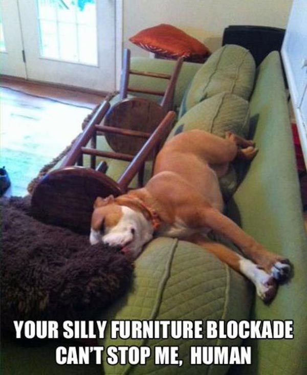 Your silly furniture blockade can't stop me human Stop Meme