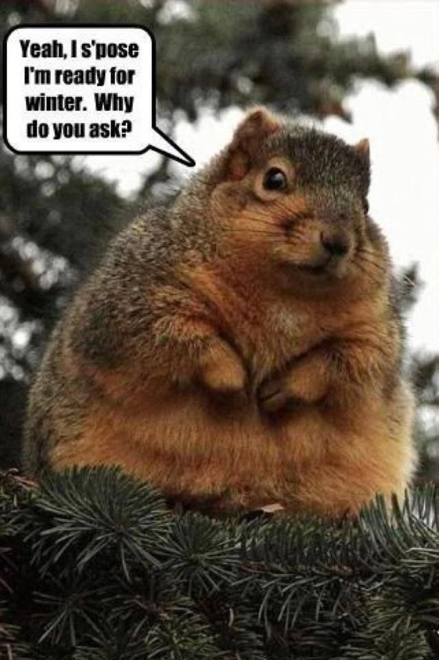 yeah is pose I'm ready for winter why Squirrel Meme