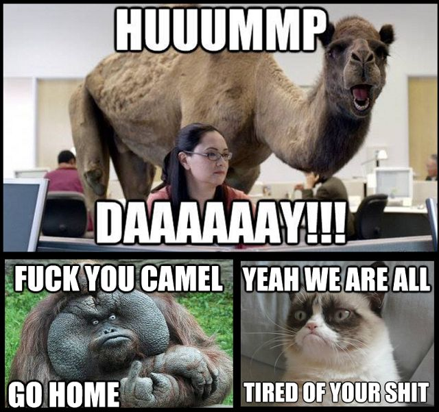 Hummp daaaaaayy fuck the camel Hump Day Work Meme