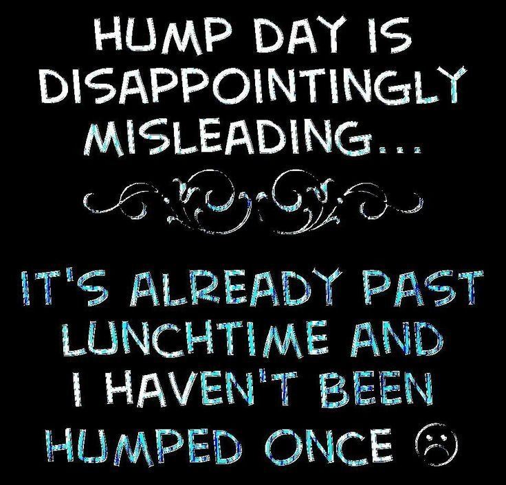 Hump Day Meme Dirty Hump day is disappointingly
