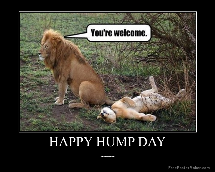 Hump Day Meme Dirty You're welcome happy hump day