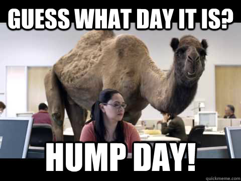 Hump Day Meme Guess what day it is hump day