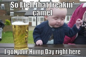 Hump Day Meme So i tell that freakibn camel