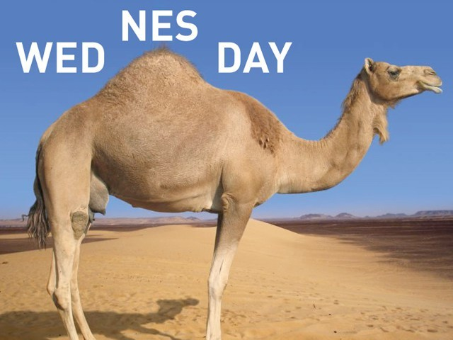 Hump Day Work Meme Wednesday