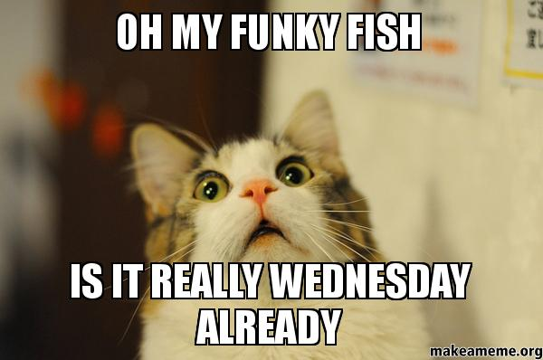 Oh my funky fish is it really Wednesday Meme