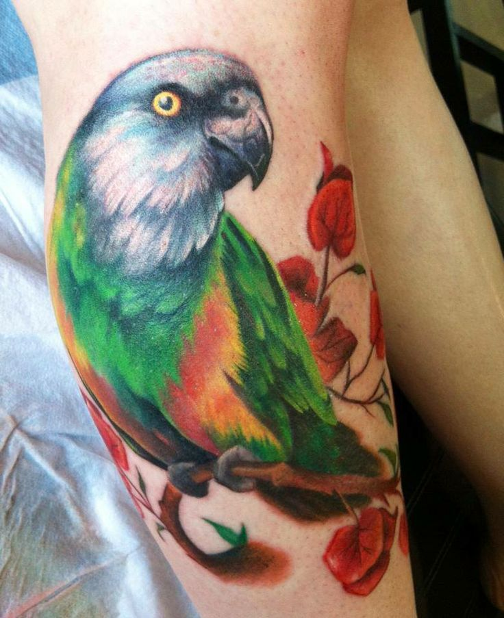 Parrot Tattoos