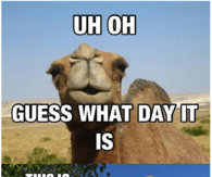 Uh oh guess what day it is Hump Day Meme